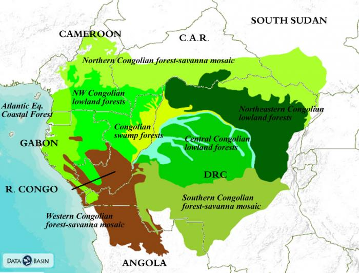 Congo Basin Rainforest Map Congo Basin Ecoregions | Global Forest Atlas