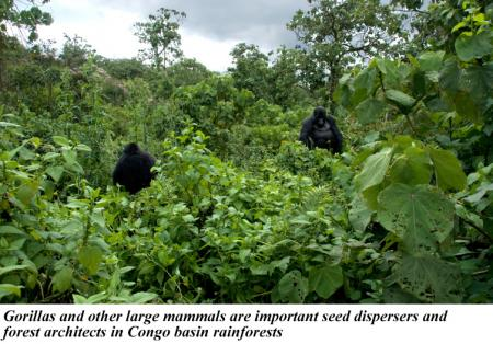Congo basin forest ecology global forest atlas congo basin forest ecology sciox Image collections