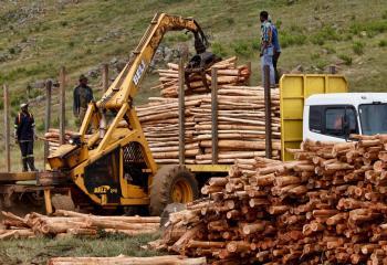 Commercial Logging | Global Forest Atlas